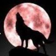 ❧孤☤狼❧
