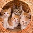 528猫猫