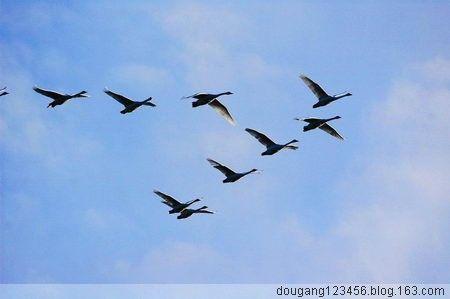 飛雁一族家族